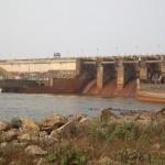 (Français) Approche méthodologique pour une conservation urgente des Podostemaceae dans les barrages hydro-électriques du Cameroun.