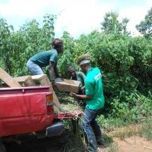 equipe-de-green-connexion-deplacant-un-echantillion-de-podostemaceae-menacees-pour-le-fleuve-avoo-a-ndji