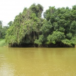 River Ecology And Distribution Of Podostemaceae In Cameroon