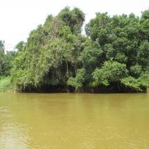 foret-riveraine-sur-le-mbam